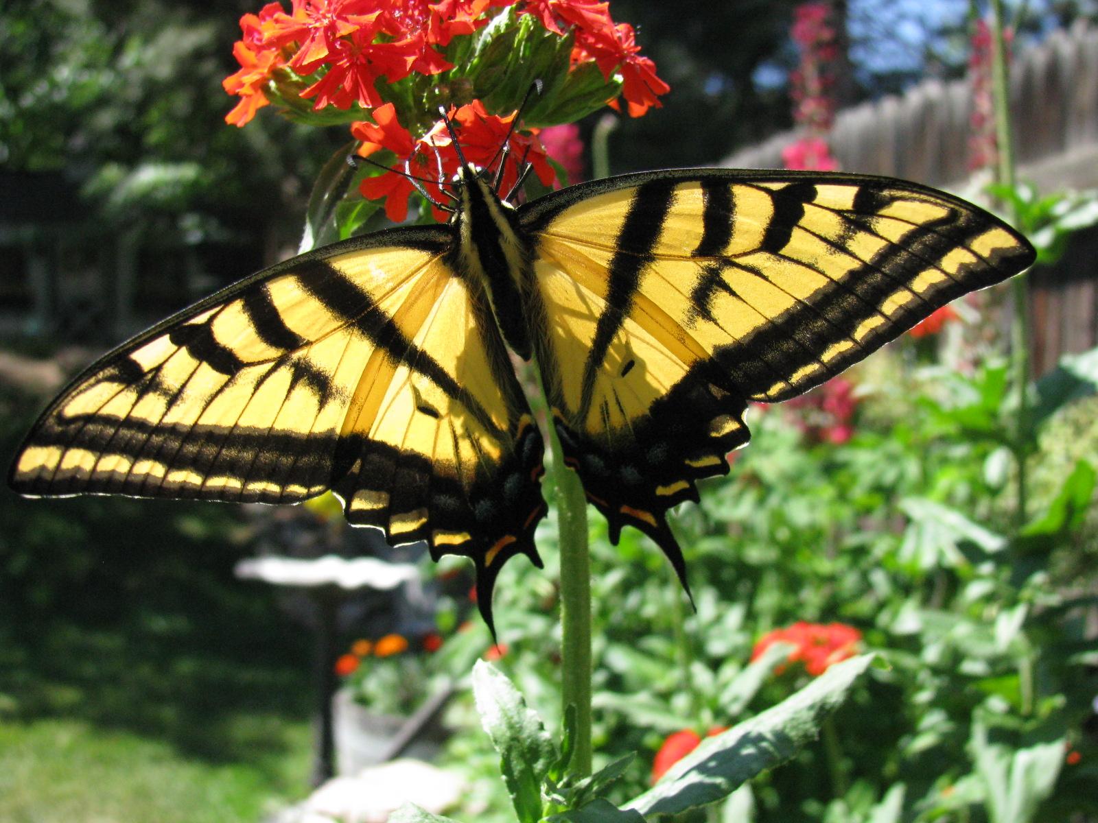 Endlich ist der Sommer da – Die Gartenmöbel-Trends 2013