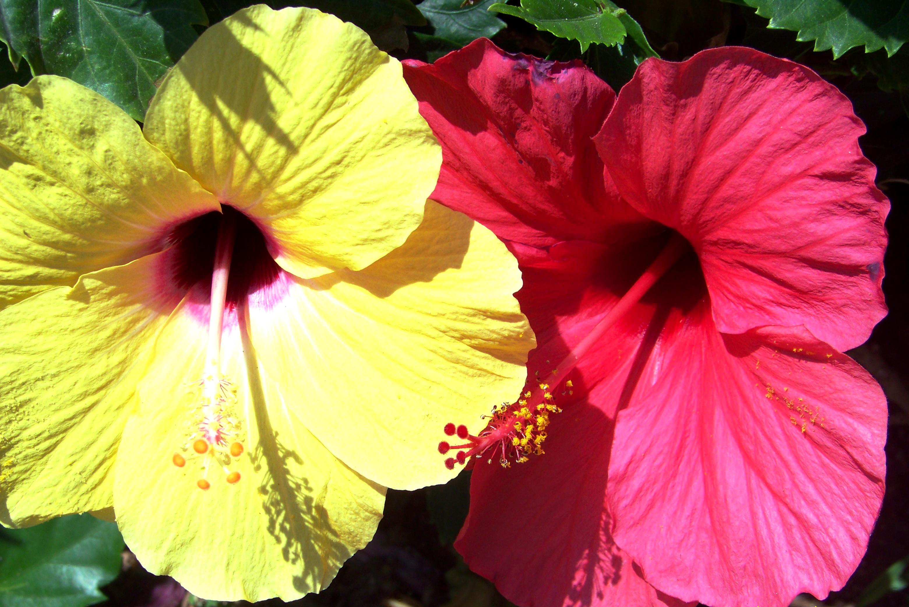 Blühende Aussichten – Die schönsten Balkonblumen