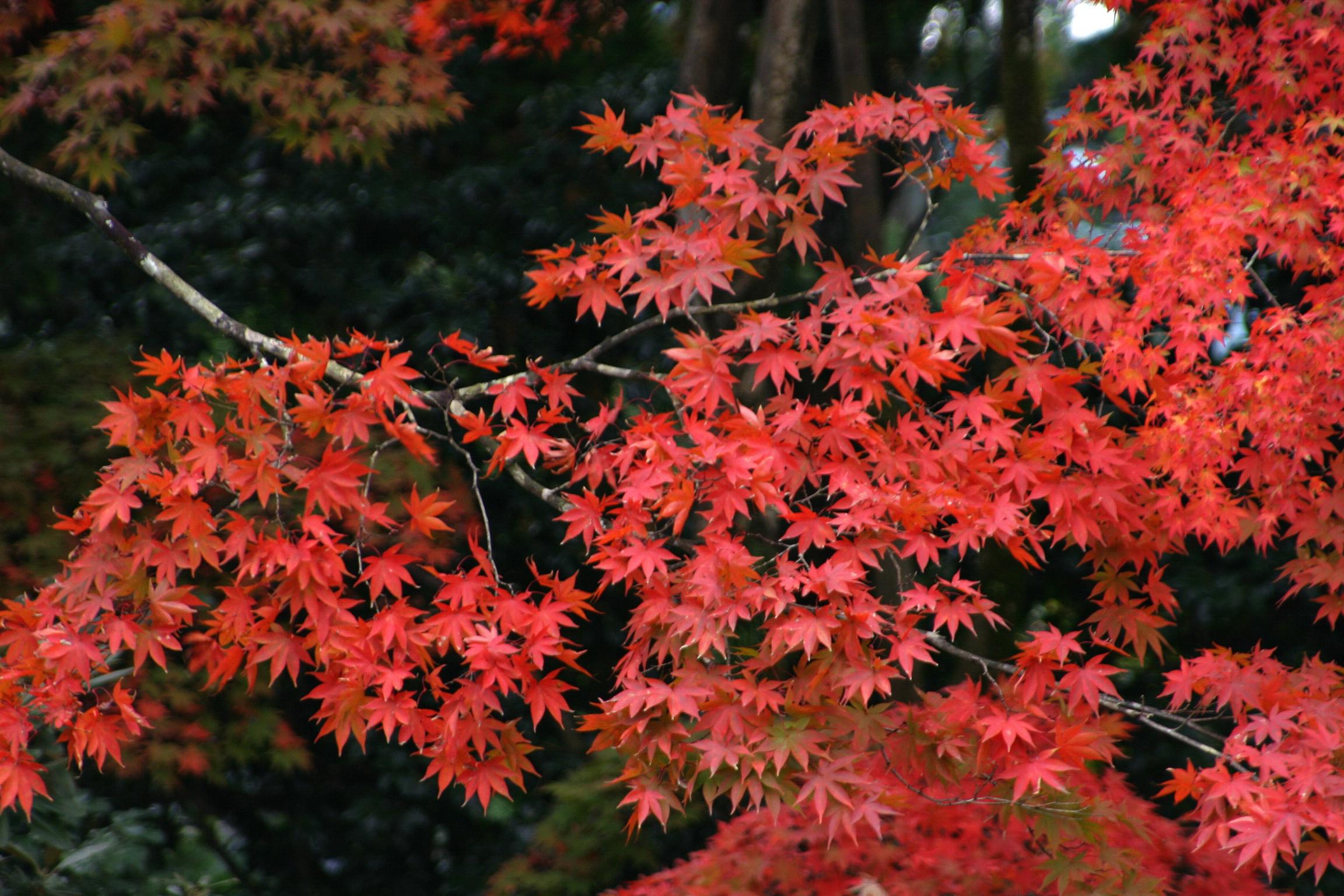Die richtige Gartenpflege im Herbst