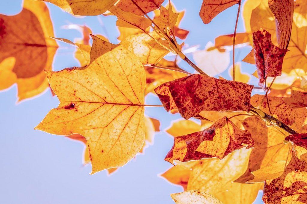 Zweisamkeit, Romantik, Herbst