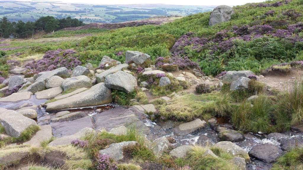 Die purpurnen Felsen von Ilkley Moor. © Stefanie Röfke