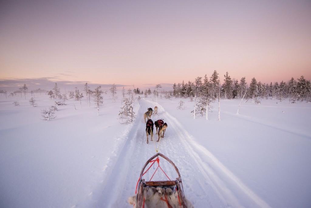 Hundeschlitten, Lappland, Husky, Urlaub in Finnland, Finnland-Reise
