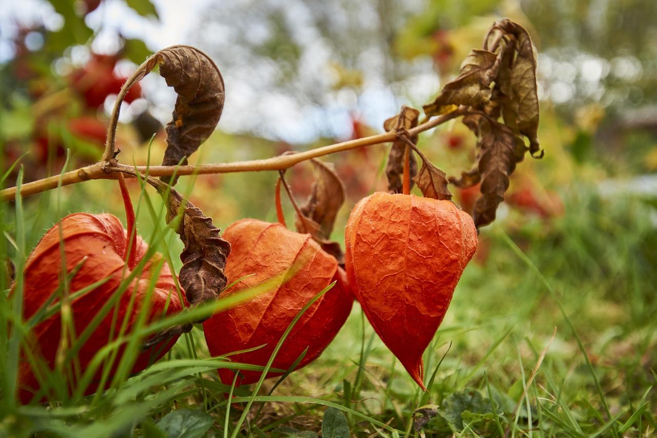 Herbstliche Deko mit Lampions aus dem Garten © pixabay.com