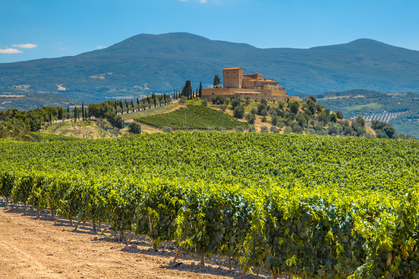 Weinreise Weinlese Toskana Italien