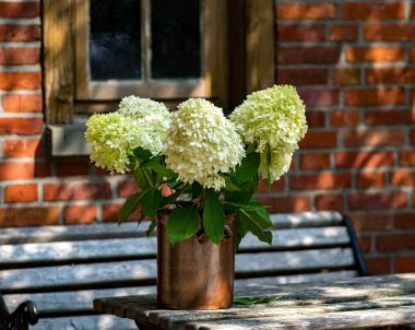 Wohnzimmer im Freien: So schaffst Du Gemütlichkeit in Deinem Garten © Thorsten_Blank / pixabay.com
