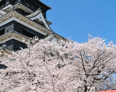 Kirschblüte vor einem japanischen Tempel © pixabay.com