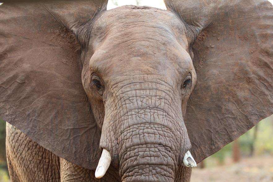 Elefant © Anna-Katharina Raaben