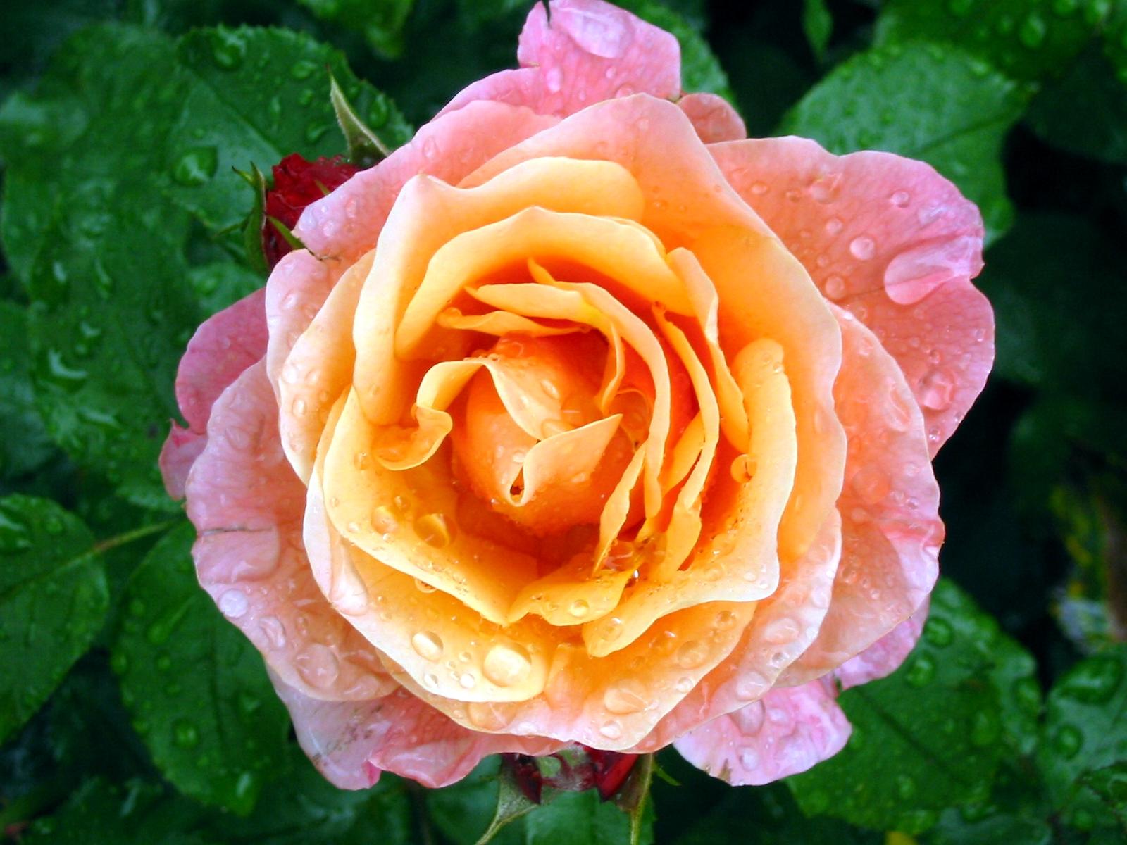 Inspiration für den Garten – Die Meisterwerke der Gartenkultur