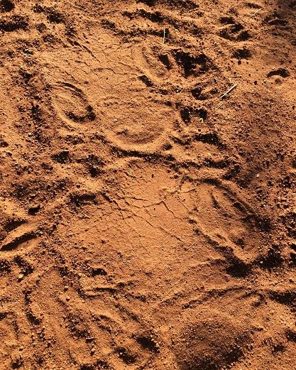Nashornspuren © Anna-Katharina Raaben