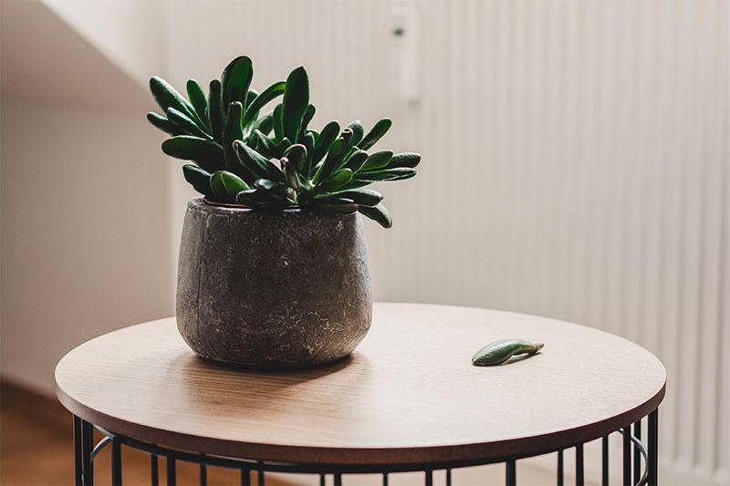 Wohnung nachhaltig einrichten - Pflanzen nicht vergessen